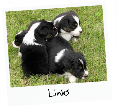 4 puppies sitting in the grass with title: Links